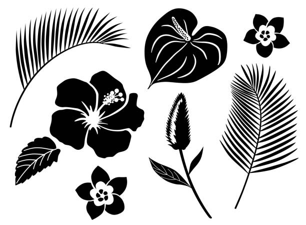 Tropical flower icon set Tropical flower icon set frangipani stock illustrations