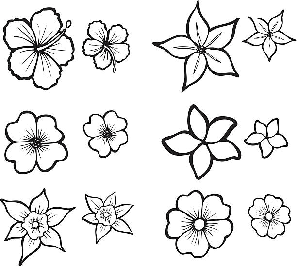 Tropical Flower Line Art Illustrations of six Tropical Flowers also available in full color. frangipani stock illustrations