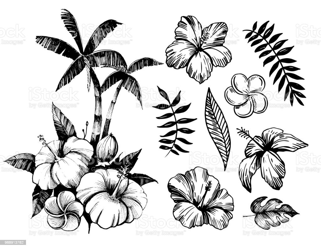 Tropical Flowers And Palm Trees Outline Vector Set Stock Vector Art