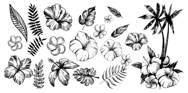 Tropical flowers and palm trees. Outline. Vector set Tropical flowers and palm trees. Outline. Vector set tropical flower stock illustrations