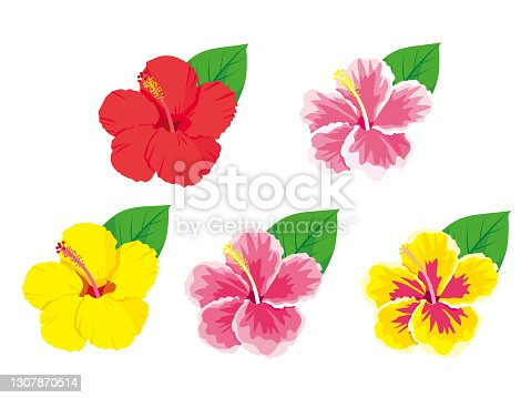 Tropical flowers hibiscus set vector illustration