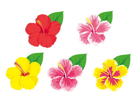 Tropical flowers hibiscus set vector illustration