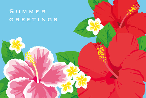 Tropical flowers hibiscus vector illustration