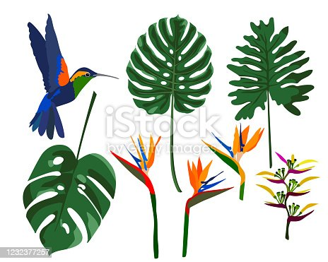 Tropical flowers, jungle leaves, monstera leaves, bird of paradise flower, hummingbird. Vector exotic illustration, floral elements isolated. Design for printing cards, invitations, poster, fabric