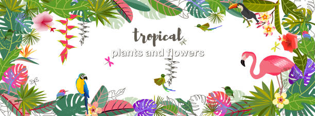 Tropical flowers leaves. Exotic monster leaf. Caribbean colors. Design pattern Tropical flowers and leaves. Exotic monster leaf. Caribbean colors. Design and pattern. Tropical style. Summer vacation at the sea. Fruits and Beverages. Frame Template bird of paradise plant stock illustrations