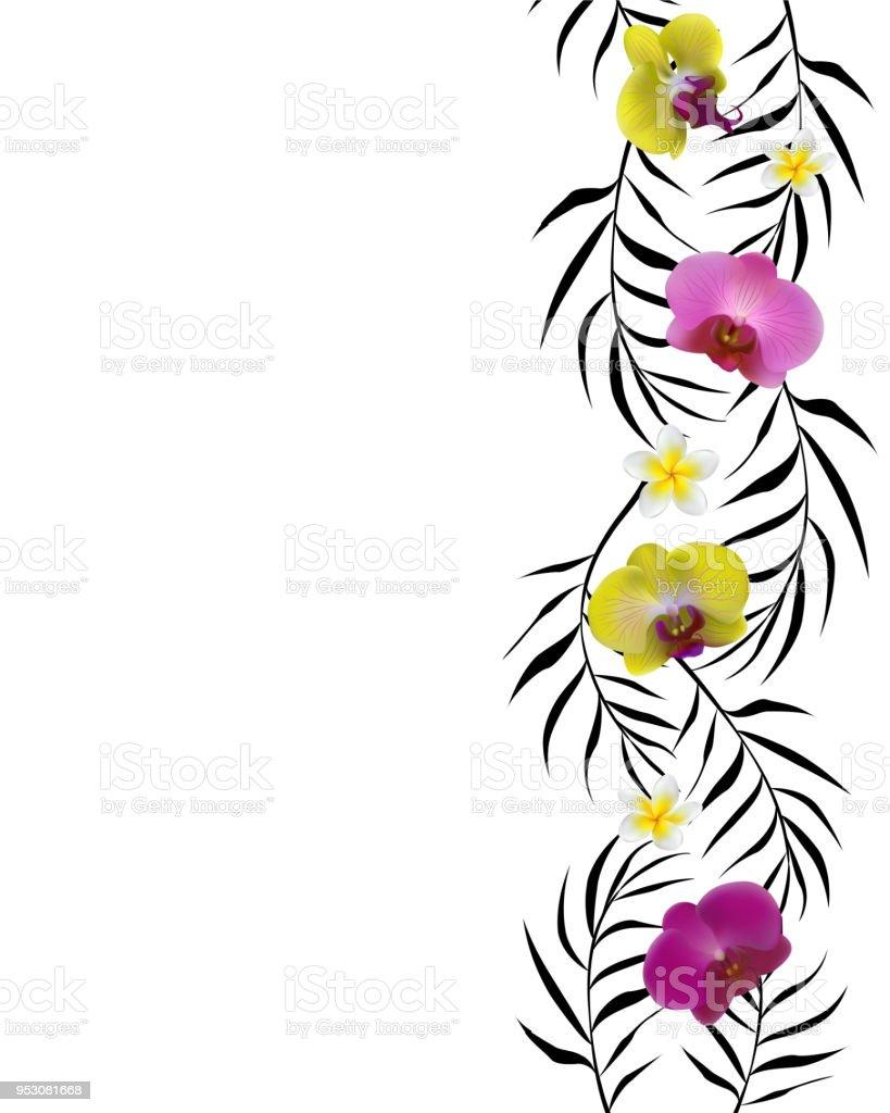 Tropical Flowers Orchids Floral Background Border Plumeria Palm