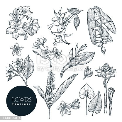 Tropical exotic flowers set, isolated on white background. Vector sketch illustration. Hand drawn tropic nature and floral design elements.