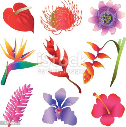 Vector icons of various tropical flowers.