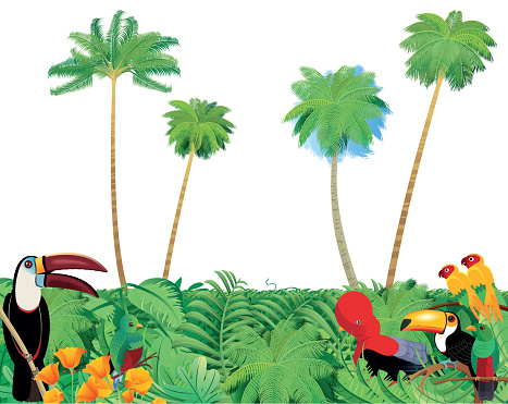 Tropical forest and Birds