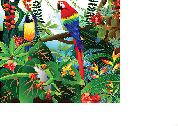 Tropical Forest Vector illustration of beautiful tropical forest with parrots and red eye frog. bird of paradise plant stock illustrations