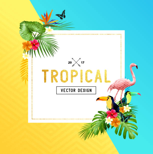 tropical frame design - summer background stock illustrations