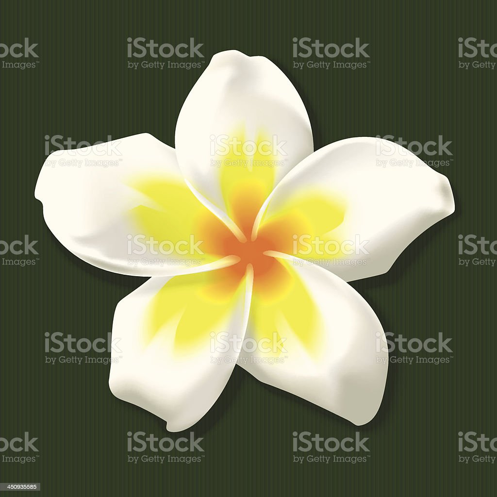 Tropical Frangipani Flower In White And Yellow Stock Vector Art
