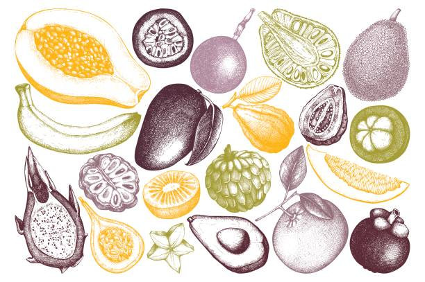 Tropical fruits collection Vector collection of hand drawn tropical fruits illustration. Vintage set of leaves, fruits,  flowers sketch white background. Exotic garden drawing. avocado borders stock illustrations