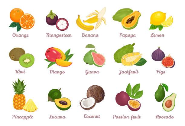 illustrations, cliparts, dessins animés et icônes de fruits tropicaux ensemble. orange, mangosteen, banane, papaya, citron, kiwi, mango, guava, jackfruit, figue, ananas, lucuma, noix de coco, fruit de la passion, avocat isolé sur blanc. illustration de dessin animé de vecteur. - fruit de la passion