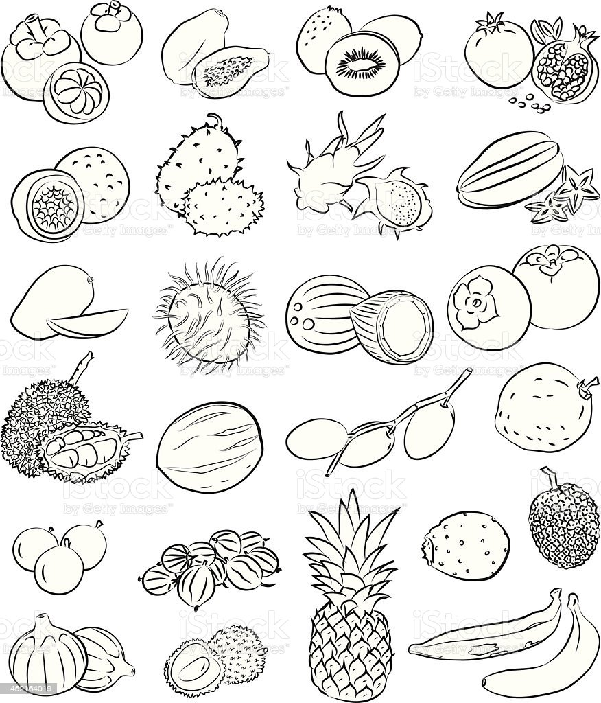Tropical Fruits vector art illustration