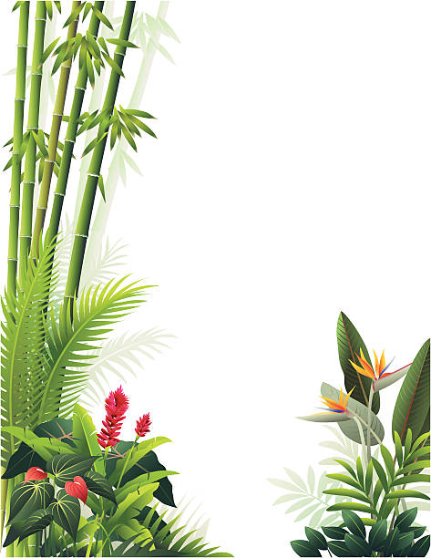 Tropical Garden Multiple layers of plants native to Hawaii and other tropical locales. See my portfolio for more. Each plant group on its own layer.  bird of paradise plant stock illustrations