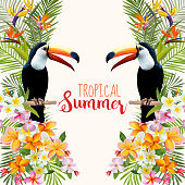 Tropical Graphic Design. Toucan and Tropical Flowers. Tropical Bird