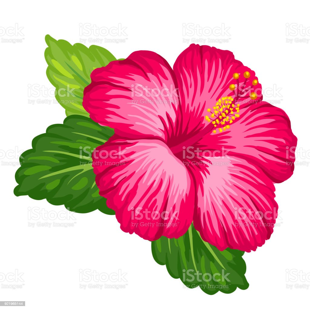 Tropical Hibiscus Flower Stock Vector Art More Images Of Art Istock