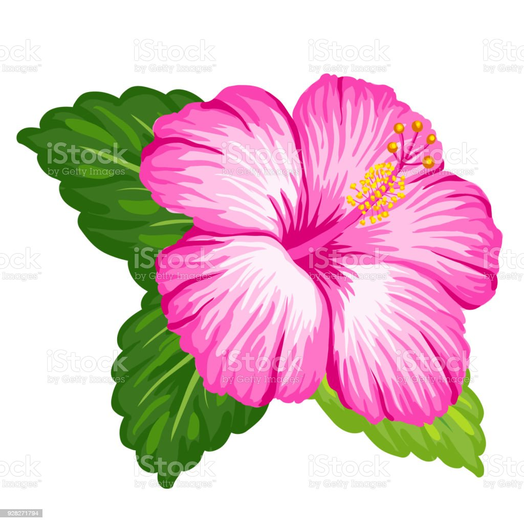 Tropical hibiscus flower stock vector art more images of art tropical hibiscus flower royalty free tropical hibiscus flower stock vector art amp more images izmirmasajfo