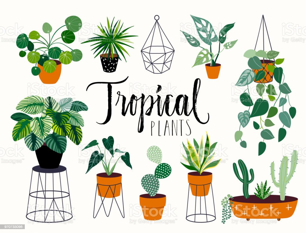 Tropical House Plants Collection With Hand Lettering Stock Illustration Download Image Now Istock