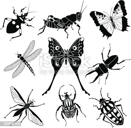 A vector illustration of nine tropical insects found in Africa.
