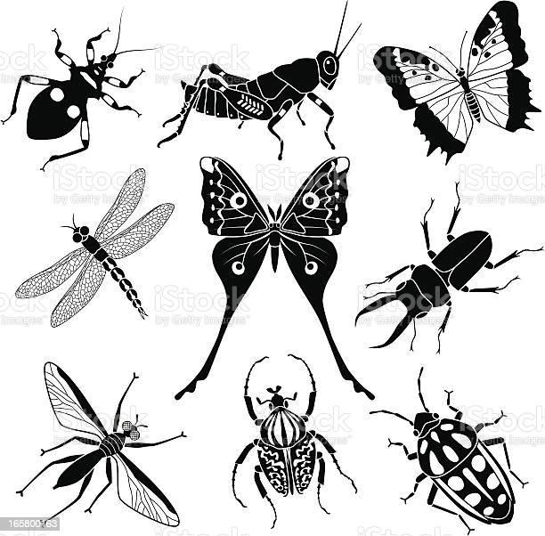 Tropical insects vector id165800163?b=1&k=6&m=165800163&s=612x612&h=mqltumqlk5jhiqq5wmbquqdra2lwhaujs 9ibuxq2q8=