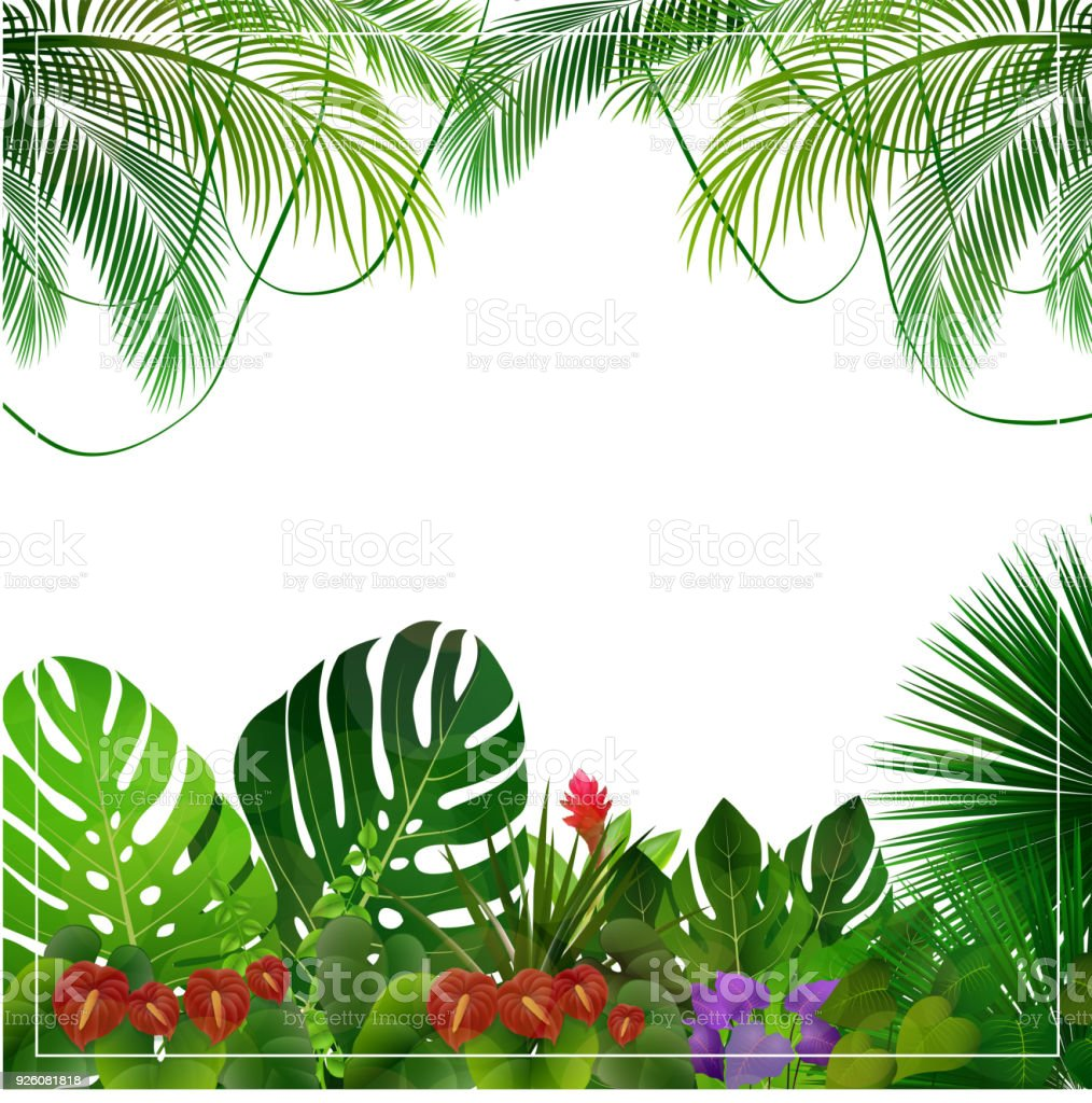 Tropical Jungle Background With Palm Trees And Leaves On White Royalty Free