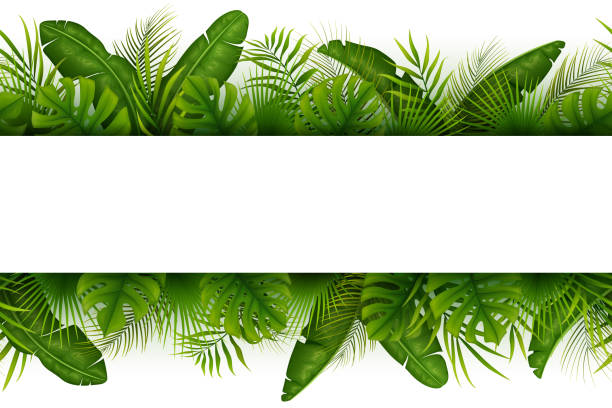 Tropical jungle background with palm trees and leaves on white background Vector illustration of Tropical jungle background with palm trees and leaves on white background banana borders stock illustrations