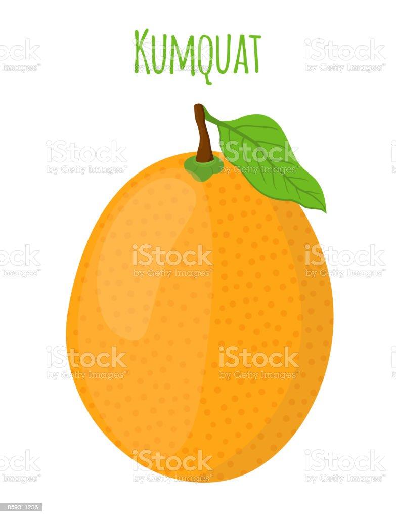 Tropical kumquat, exotic fruit. Cartoon flat style. Vector illustration vector art illustration
