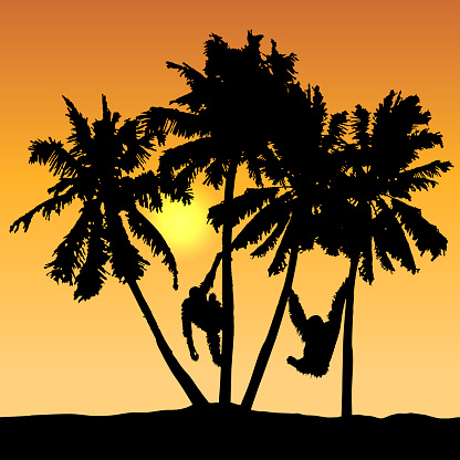 Tropical landscape vector with monkeys on palms and yellow sun on orange shaded sky.