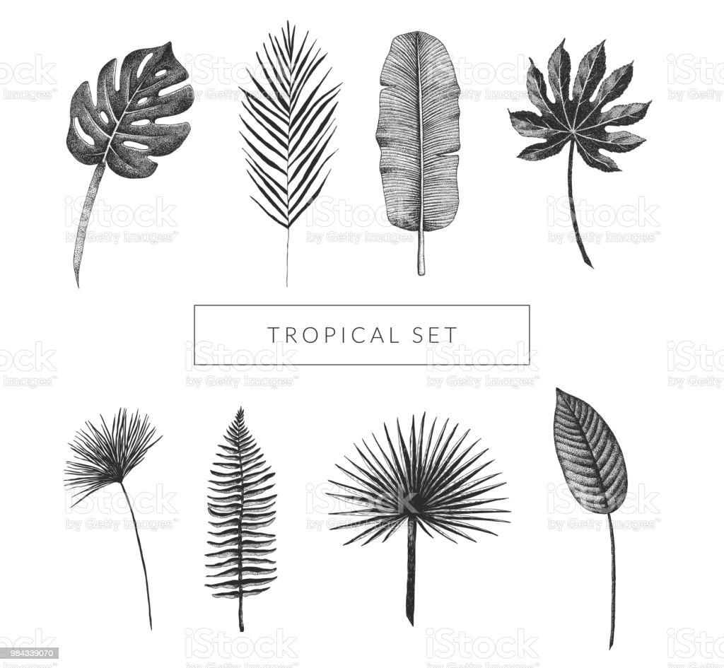 Collection Feuille Tropique Set De Vector De Plantes