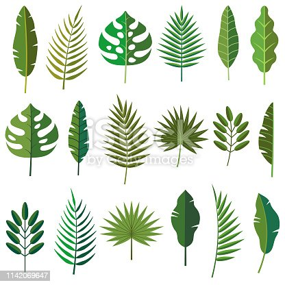A set of tropical leaves. File is built in CMYK for optimal printing.
