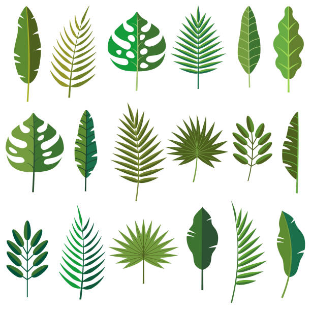 tropical leaf icons - palm tree stock illustrations