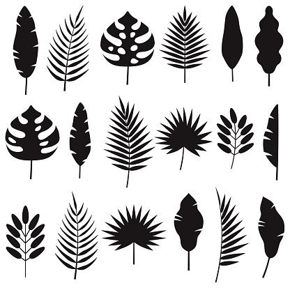 Tropical Leaf Silhouettes Set