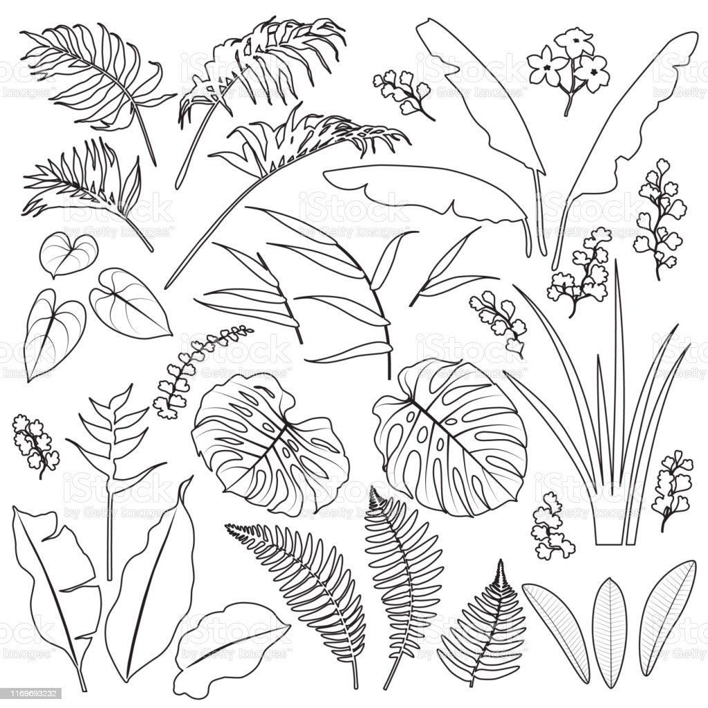 Tropical Leaves And Flowers Outline Set Stock Illustration Download Image Now Istock Choose from over a million free vectors, clipart graphics, vector art images, design templates, and illustrations created by artists worldwide! tropical leaves and flowers outline set stock illustration download image now istock