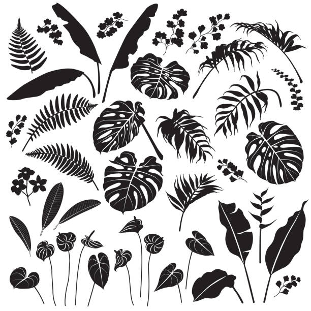 Tropical Leaves and Flowers Silhouette Set Tropical plant set. Black silhouettes of palm leaves, banana plants, monstera, tropic flowers isolated on white background. Vector flat illustration. tropical flower stock illustrations