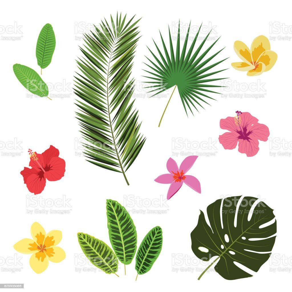 Tropical leaves and flowers, summer elements for your design, banner, flyer, poster, etc. vector art illustration