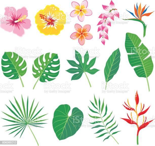 Tropical leaves and flowers vector id836365212?b=1&k=6&m=836365212&s=612x612&h=sr73fmqxyh5ytogrn24ajwooc9zl4qg17sneh4vrsvu=