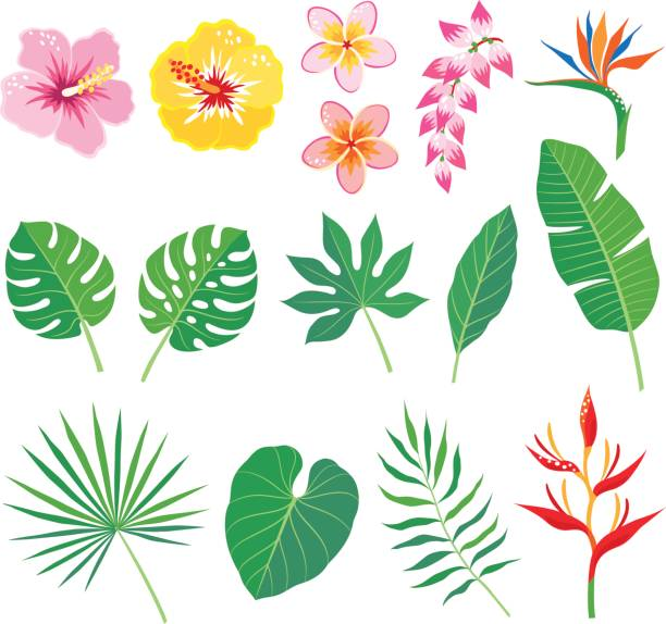 Tropical leaves and flowers Set of tropical leaves and flowers isolated on white background frangipani stock illustrations
