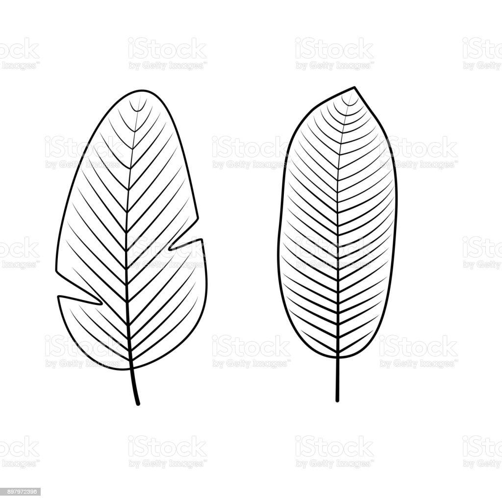 Tropikal Yaprak Koleksiyonu Vektor Cizim Stok Vektor Sanati Agac