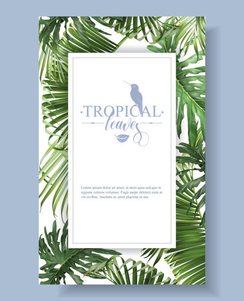 Tropical leaves frame Vector tropical leaves banner on white background. Exotic botanical design for cosmetics, spa, perfume, health care products, aroma, wedding invitation. With place for text idyllic stock illustrations