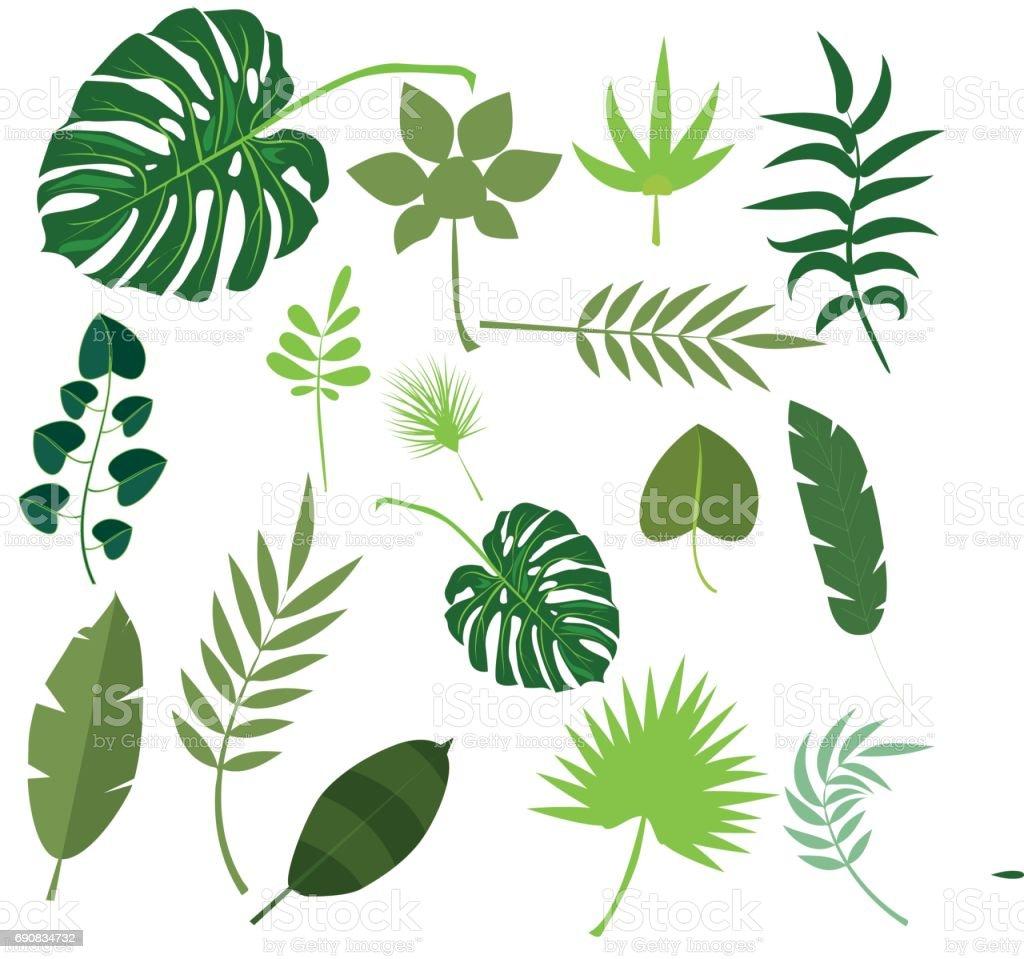 Ilustración de vector de verano selva exótica hoja verde de Palma hojas tropicales - ilustración de arte vectorial