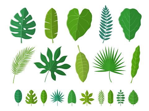 Tropical Leaves Set. Vector Illustration