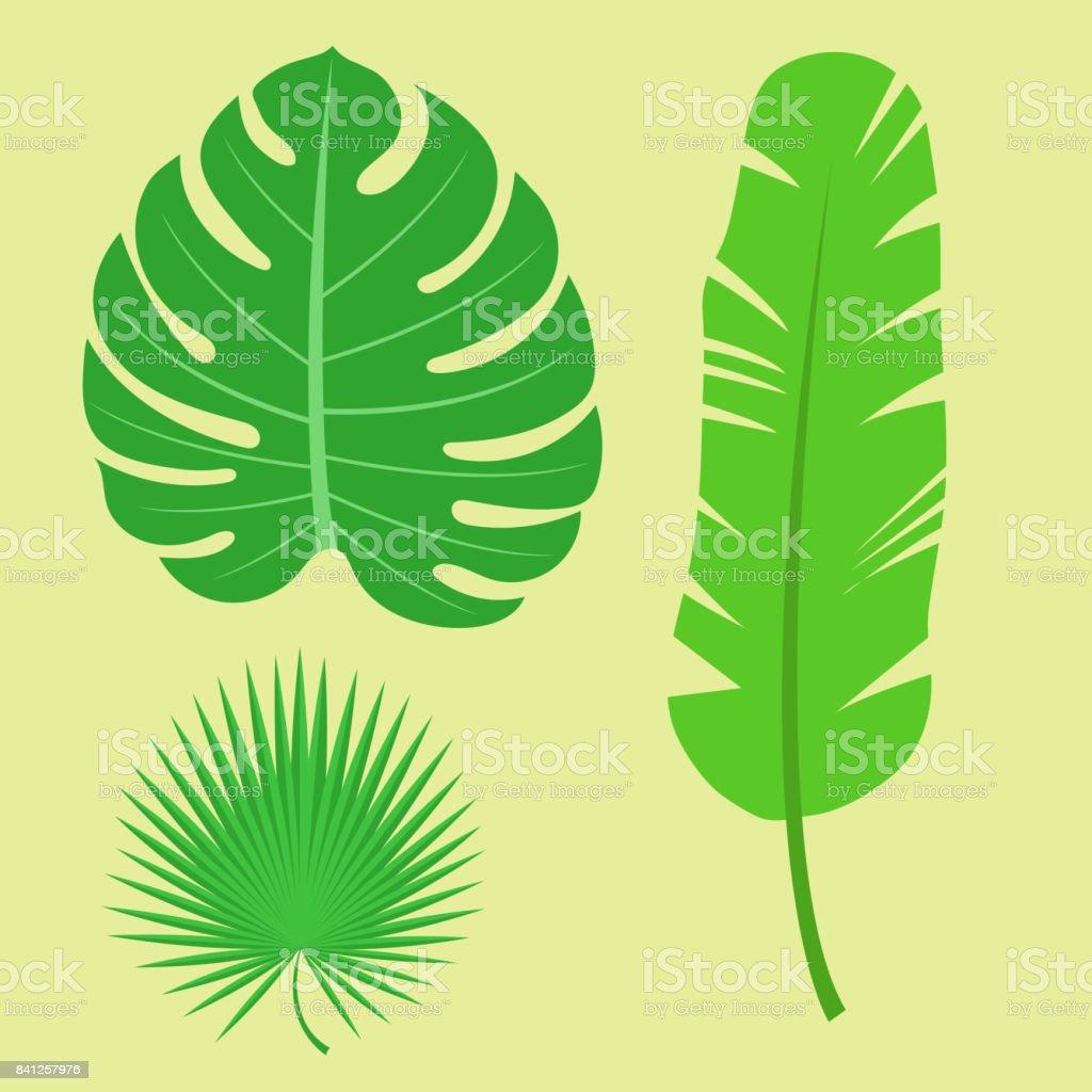 Tropical deja verano selva Palma verde hoja diseño exótico Hawai monstera flora botánica vector ilustración - ilustración de arte vectorial