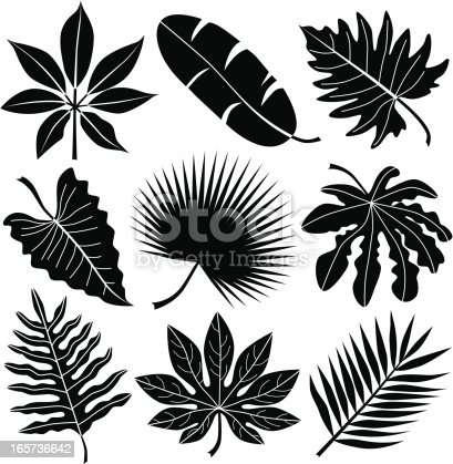 A vector illustration of various tropical leaves.