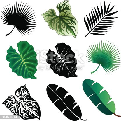 Vector illustrations of tropical leaves in black and white and in color.