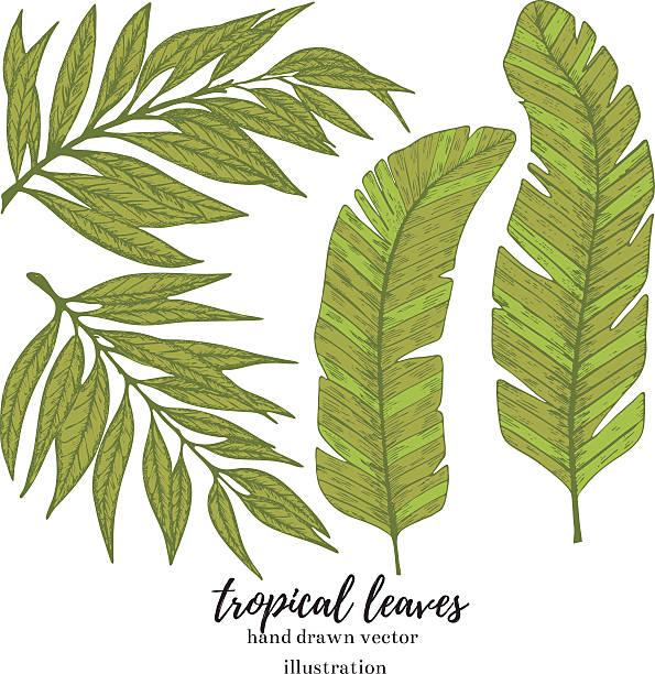 Tropische Blätter – Vektorgrafik