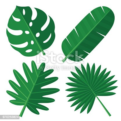 Vector illustration of tropical leaves.