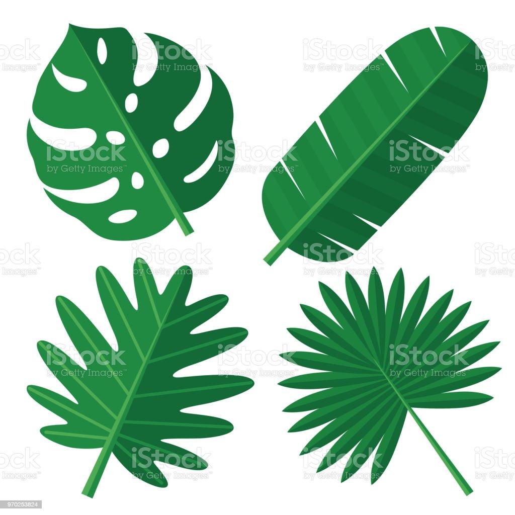 Hojas de Tropical - ilustración de arte vectorial