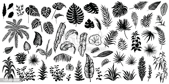 Tropical leaves silhouettes isolated on white background. Vector palm leaf, monstera and other plants illustrations.